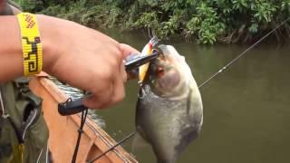 Рыбалка на пиранью в амазонке