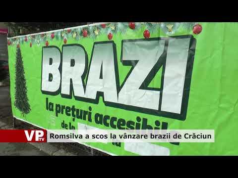 Romsilva a scos la vânzare brazii de Crăciun