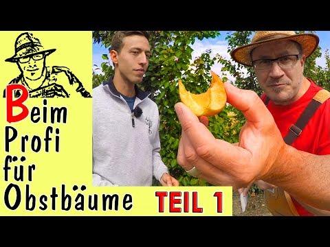 Obstbäume im Garten: Tipps vom Profi Teil 1