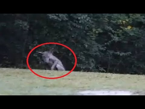 Top 10 Mythical Creatures Caught On Camera