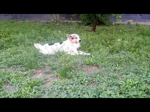 Стёпа на траве