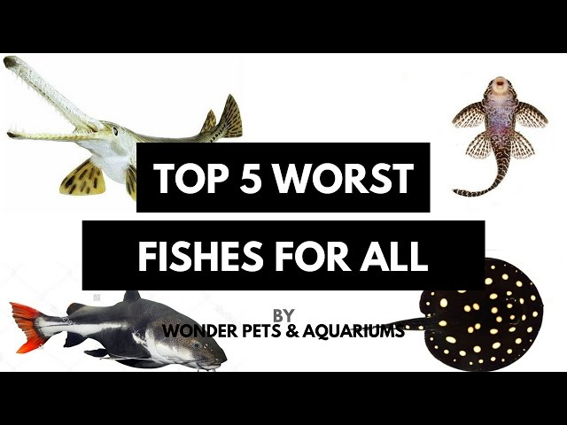 Worst Aquarium fishes you must avoid(Tamil)