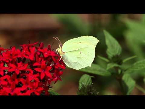 הצצה מדהימה לעולמם של הפרפרים