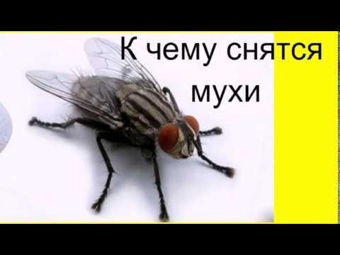 К чему снятся мухи .Сонник от Ирины