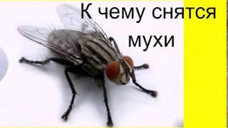 К чему снятся Мухи видео -К чему снятся мухи