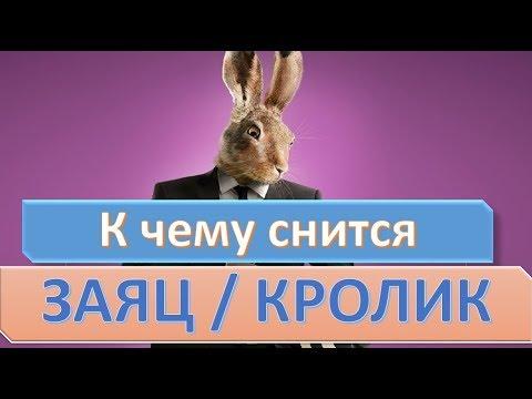К чему снится заяц (кролик) | СОННИК