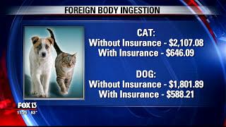 Expert Tips on the Best Pet Insurance