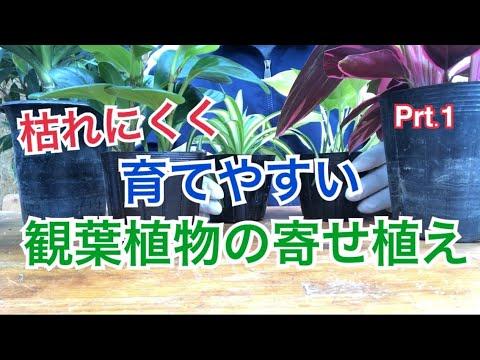 , title : '育てやすい観葉植物の寄せ植えの作り方