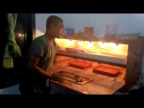 Video Cara beternak puyuh persiapan penetasan telur puyuh