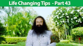 Life Changing Tips Part 43 | Saint Dr MSG Insan