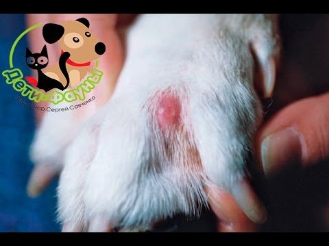Новокаиновая блокада собаке. Советы ветеринара