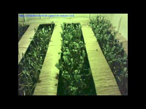 Alfalfa + Ormus Time Laps