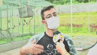 Projeto Asas promove acolhimento de animais vítimas de acidentes e crimes ambientais