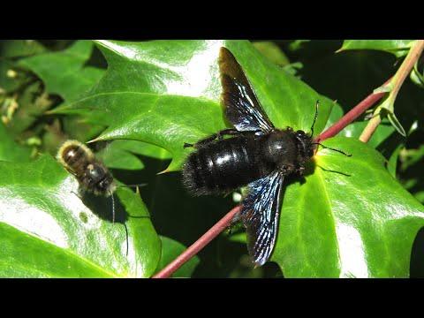 A helmint paraziták szabályozói mesterei