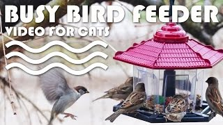 Bird feeding frenzy - Lots of fluttering wing action! BIRD VIDEO FOR CATS.