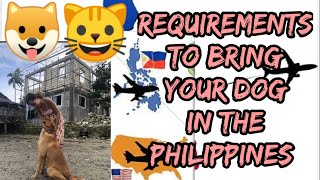 Requirements How to Bring Your Pet From USA to Bohol Philippines | Foreigner Living in Philippines