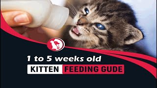 How Much to Feed kitten age 1 to 5 weeks old : Kitten Feeding Schedule  [ Pet Animalia ]