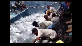 صيد اسماك الدرب الجزئ 1