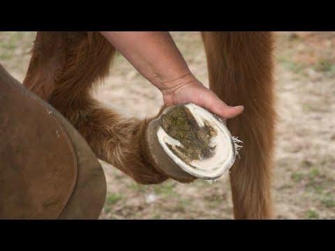 Medicina tradizionale mal di articolazione del pollice