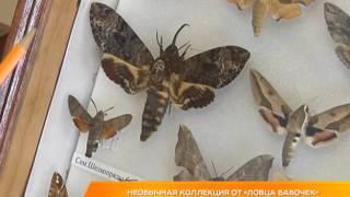 """Необычная коллекция от """"ловца бабочек"""""""