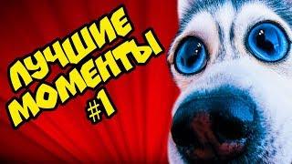 DOGVLOG: ЛУЧШИЕ МОМЕНТЫ №1 (Хаски Бандит) Говорящая собака