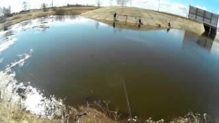 Река векса ярославская область купанское рыбалка