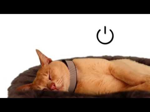 Video 3 Gadget yang Wajib Dimiliki Pet Lover