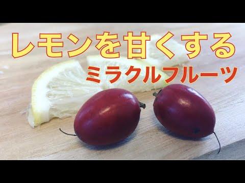 , title : '【衝撃】ミラクルフルーツの特徴と食レポ! 次に食べるものを甘くする!?