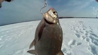 Рыбалка на исетском озере зимняя