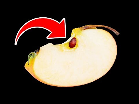 What If You Ate Apple Seeds by Accident?