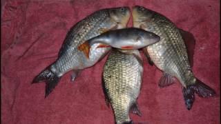Рыбалка омская обл озеро салтаим