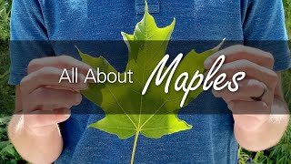 The Maple: Learning About Canada's Tree