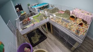 Complaining While Cleaning: Guinea Pig C&C Cages With Fleece