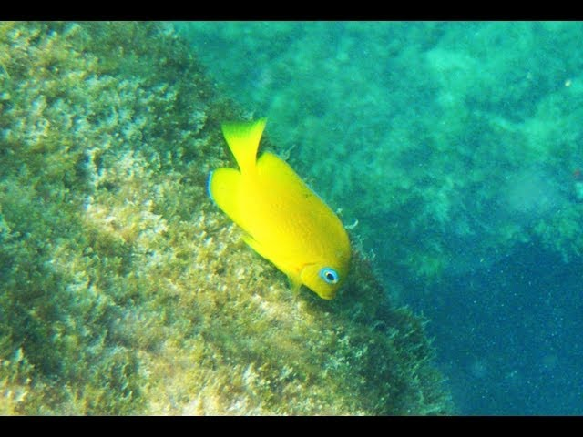 Jetties at St. Andrews State Park snorkeling- Panama City Beach