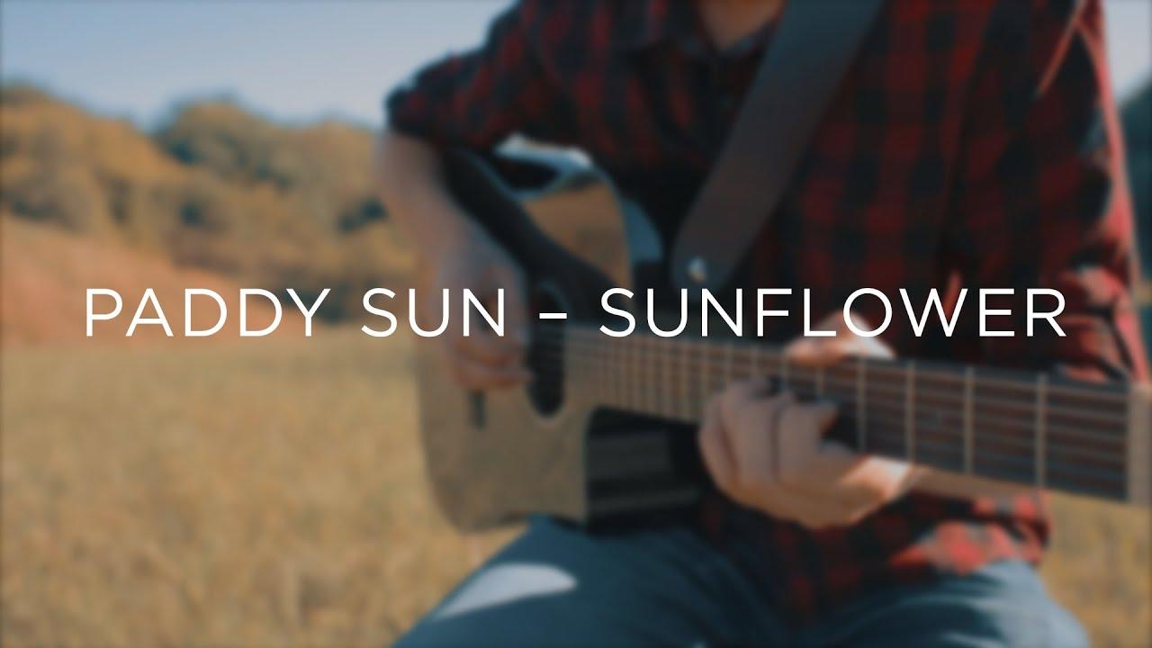 Kết quả hình ảnh cho sunflower - paddy sun