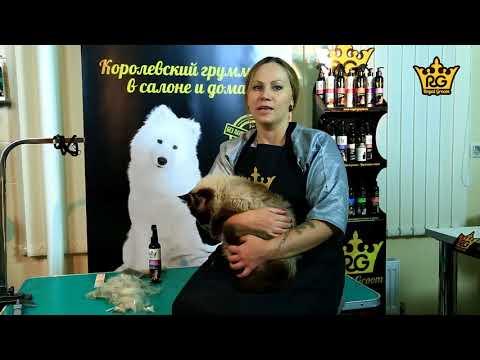 Как вычесать колтуны у кошки – уход за длинной шерстью кошки. Royal Groom Объем и эластичность.
