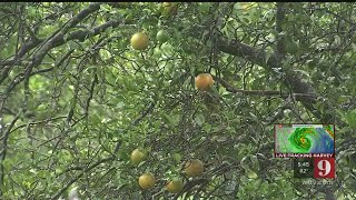 Video: 9 Investigates agricultural tax exemption for growers
