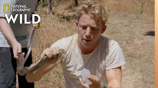 The Second Deadliest Snake in Australia | Out There With Jack Randall