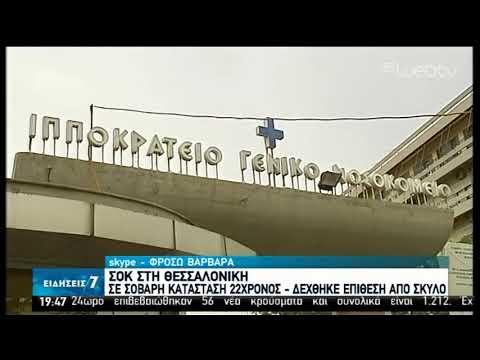 Θεσσαλονίκη | Σοκ με επιθέσεις από αγέλες αδέσποτων σκυλιών | 30/03/2020 | ΕΡΤ