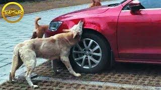 10 สัตว์ที่ลุกขึ้นมาแก้แค้นมนุษย์ (กรรม!!)
