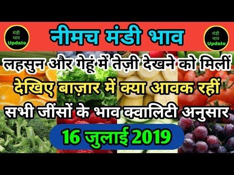 नीमच मंडी लहसुन 16 जुलाई भाव / neemuch mandi 16 july ka bhav / नीमच मंडी प्याज का भाव / today bhav