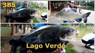 Fim de Tarde no Lago Verde - Fishingtur na TV 385