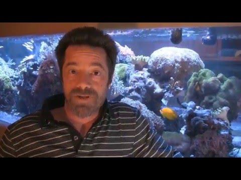 DC Water Pumps, LA Fishguys Tech Talk Episode 152, part 3