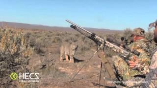Смотреть онлайн Охотники удивились, когда встретили рысь