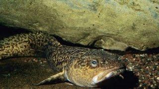 Рыбалка в челябинской области налим
