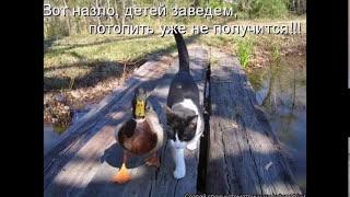 Кошки летом - жаркие фото 2014 года