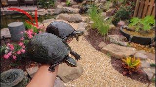 I FOUND My TURTLES!!!