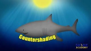 Shark - Camouflage