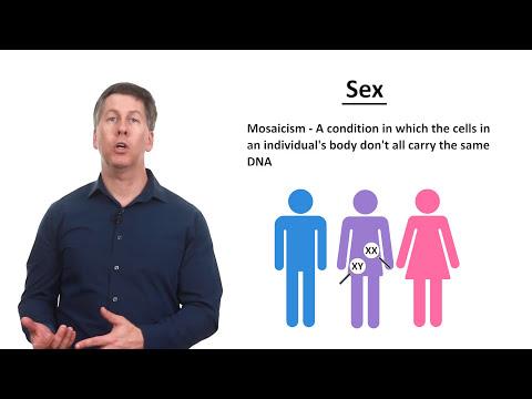De ce dimineața erecția este mai puternică
