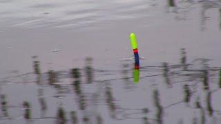 Все о ловля плотвы в мае на реке